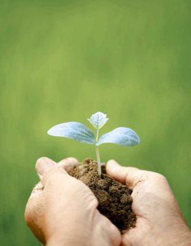Pflanze-Patientengeschichten